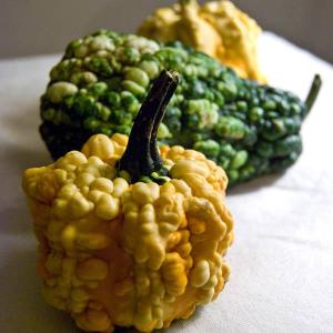 Gourd Verracousa Gourds Australian Seed