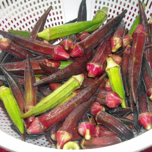 how to grow okra from seed in australia