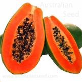 PAW PAW Red Army F1 Bisexual (Papaya) Carica papaya