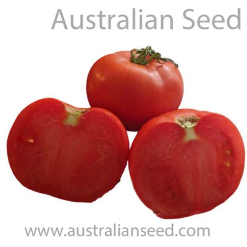 V 374 CUCUMBER Beit Alpha Seeds