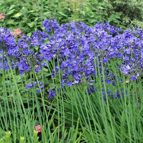 Dark Blue Flower Border