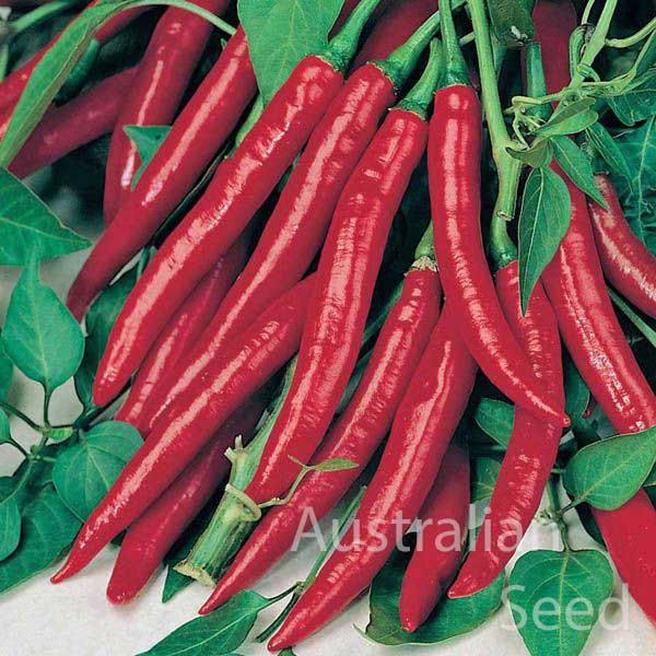 Chilli Cayenne Red Hot Chilli Hot Pepper Australian Seed