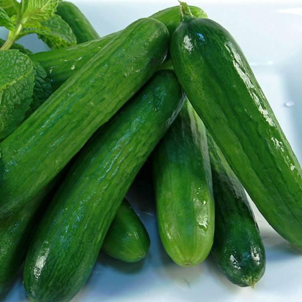 Cucumber Lebanese View All Australian Seed