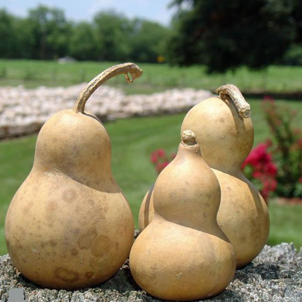 How To Make Drinking Gourd