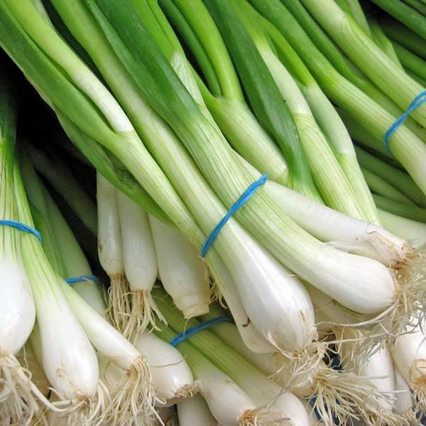 Onion Bunching Nebuka Heirloom Onion Family Australian Seed