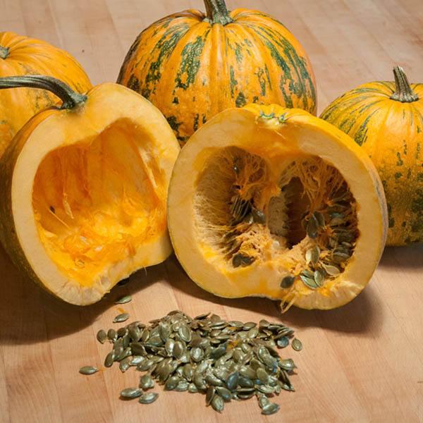 Naked seed pumpkin/oil pumpkin. Seeds for eating /pumpkin