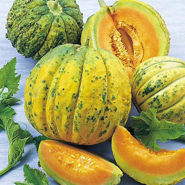 Buy Rockmelon Zatta Cantaloupe Australian Seed There is no cooking time. buy rockmelon zatta cantaloupe