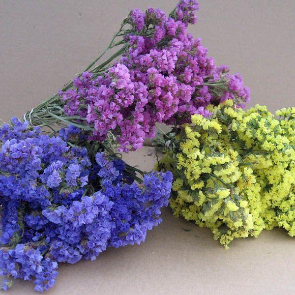 Australian Seed Statice Petite Bouquet Mix