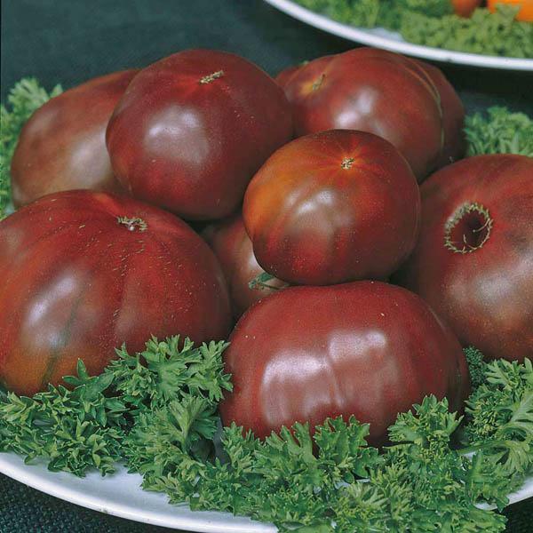 australian seed tomato black russian. Black Bedroom Furniture Sets. Home Design Ideas