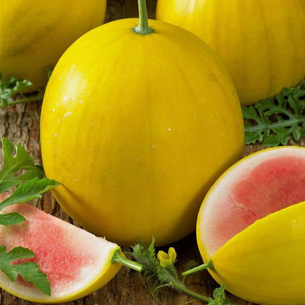 Gold watermelon