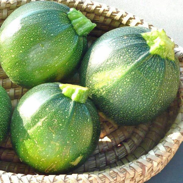 australian seed zucchini round. Black Bedroom Furniture Sets. Home Design Ideas