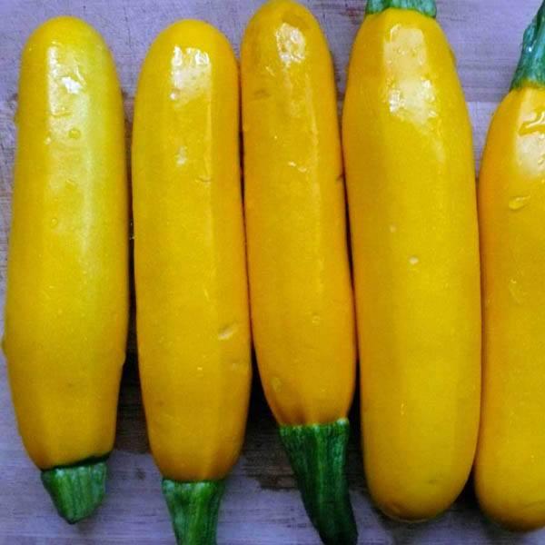 Zucchini Yellow Straight Neck Zucchini Australian Seed